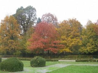 Slika jesenske boje stabala
