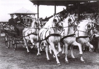 Slika stara razglednica konji i kočija