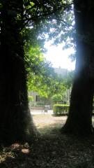 Slika pogled na bolnicu iz krošnje stabala