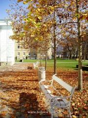 Slika park bolnice u jesen